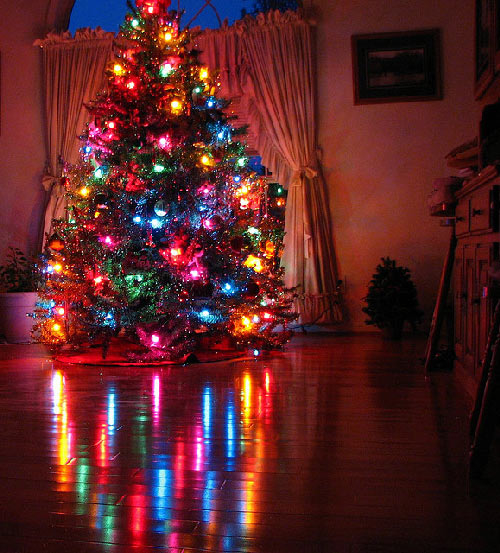 Christmas tree reflection pictures photos and images for
