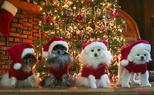 Christmas Animals Pictures, Photos, and Images for Facebook ...