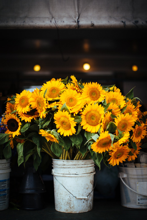 Sunflower Bucket Pictures, Photos, and Images for Facebook ...