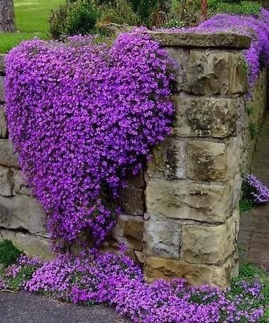 Heart Shaped Purple Flowers Pictures Photos And Images For