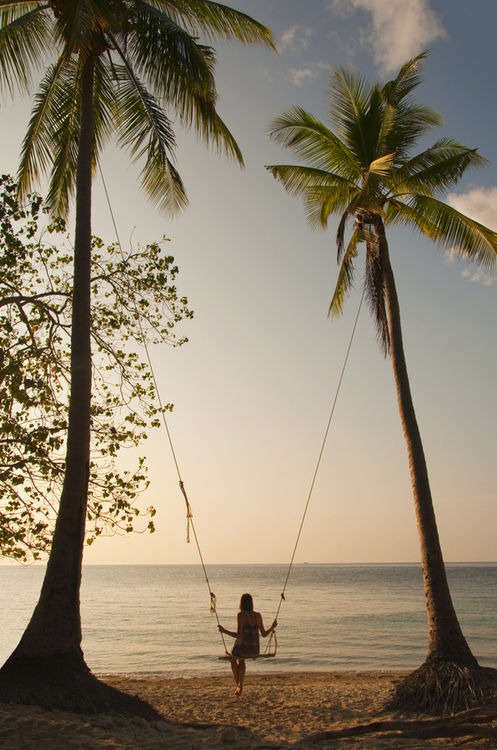 Palm Tree Swing Pictures Photos And Images For Facebook