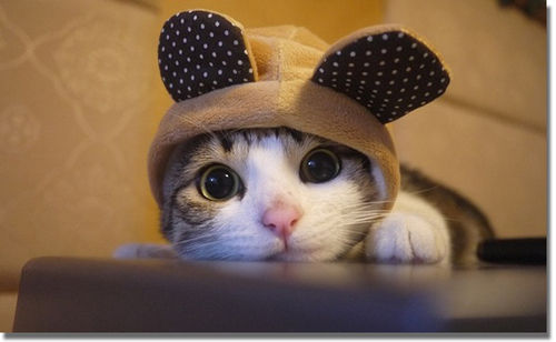 Cute Kitty Hat Pictures Photos And Images For Facebook Tumblr Pinterest And Twitter