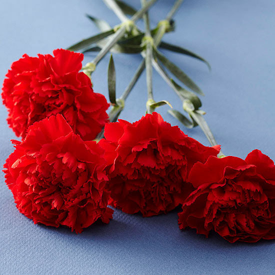 Red carnations pictures photos and images for facebook tumblr pinterest and twitter - Flowers good luck bridal bouquet ...