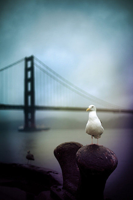 Seagull By The Baby Pictures, Photos, and Images for ...