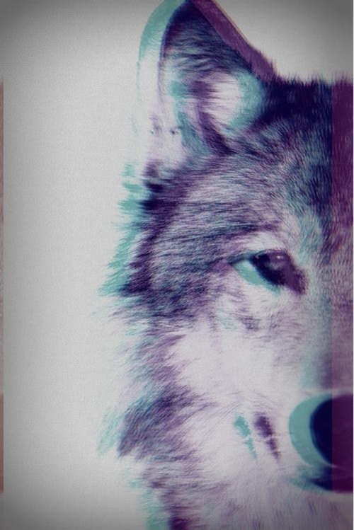 3d wolf pictures photos and images for facebook tumblr