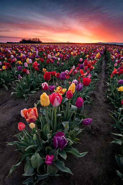 Easter Flowers Images: Field Of Colorful Flowers Pictures, Photos, And Images For