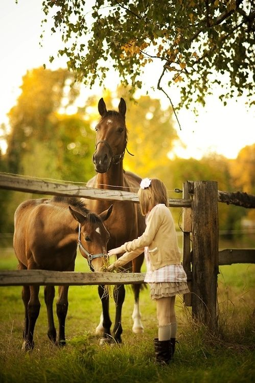 Sweet Horses Pictures Photos And Images For Facebook
