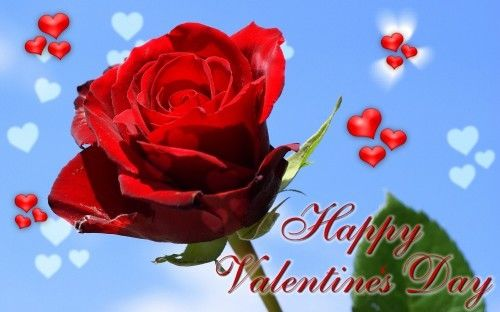 Happy Valentines Day Rose Funny Quotes For Friends