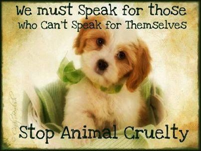 Animal Cruelty Quotes Alluring Stop Animal Cruelty Pictures Photos And Images For Facebook