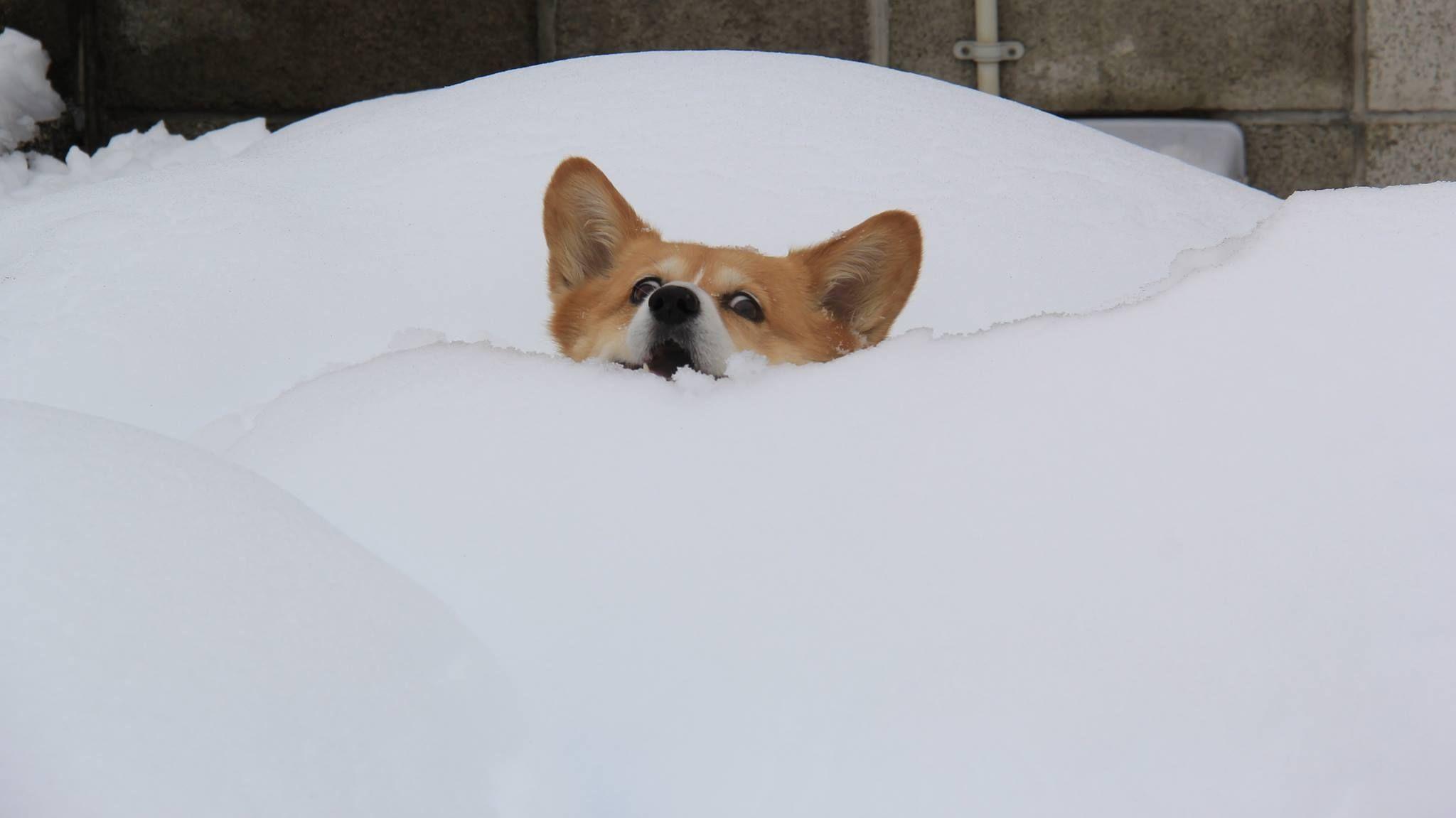 64869-Dog-In-The-Snow.jpg