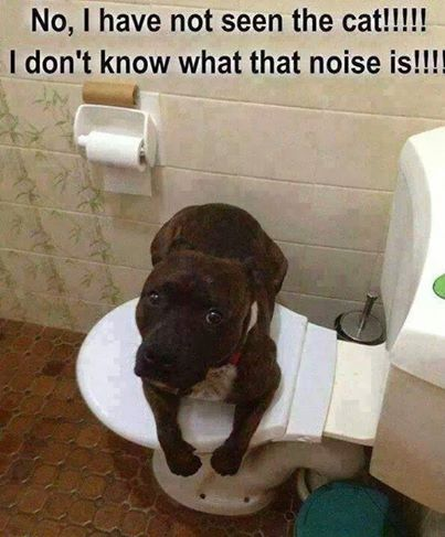 Funny Dog Pictures Photos And Images For Facebook