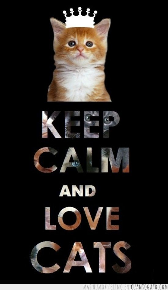 Keep Calm And Love Cats Pictures, Photos, and Images for ...
