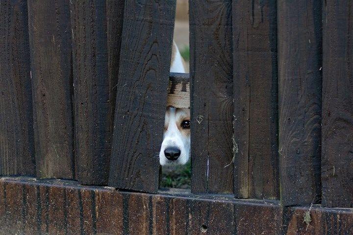 65876-Spying-Dog.jpg