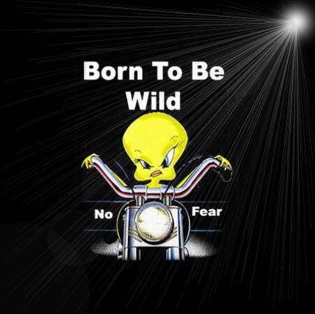 Born to be wild rough gangbang xp 1