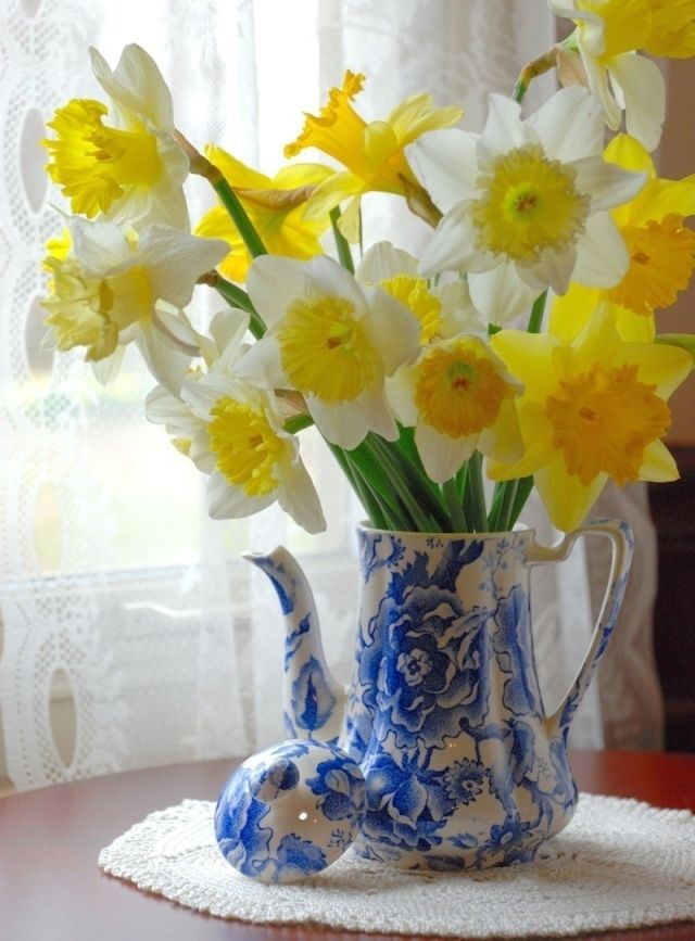 Daffodils in a blue pitcher pictures photos and images