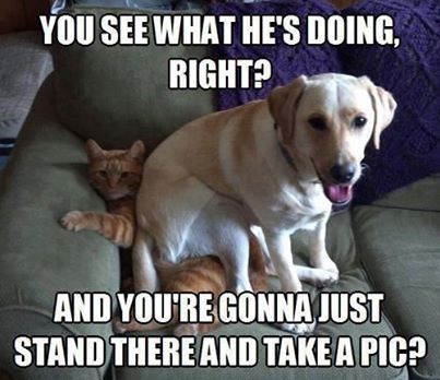 Image result for FUNNY DOG PICTURES