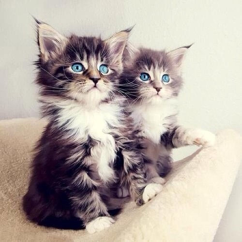 Cute kittens pictures photos and images for facebook - Cute kittens hd images ...