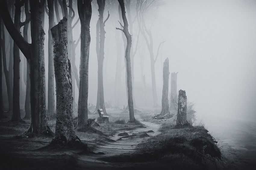 haunting forest pictures  photos  and images for facebook