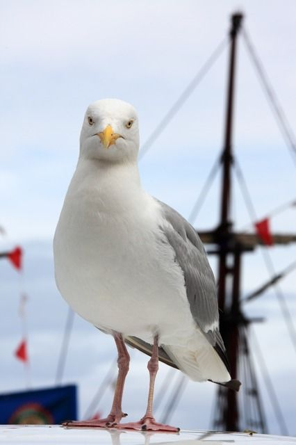 Seagull Close Up Pictures Photos And Images For Facebook