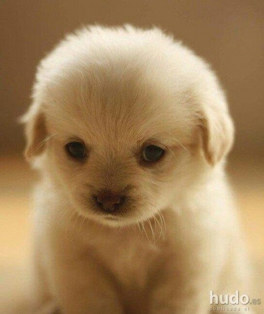 Cute Fluffy Puppy Pictures Photos And