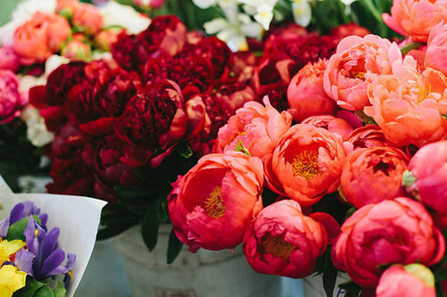 Image Result For Garden Peonies Flowers