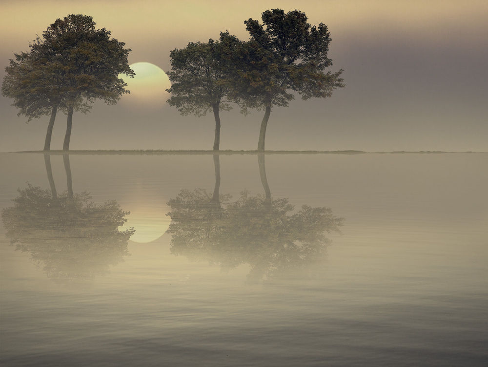 18 Naturally Beautiful Photos of Trees - World inside pictures