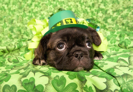 Image result for st patricks day images