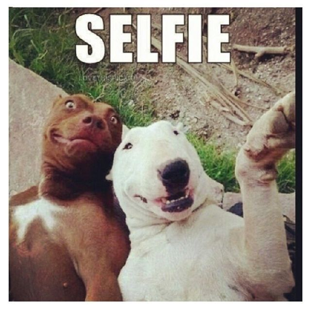Funny Selfie Quotes Tumblr Selfie