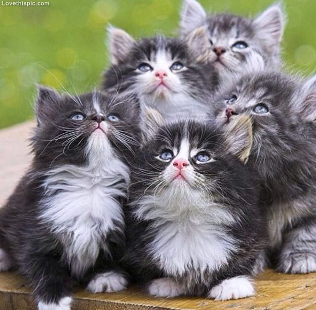 Cute Baby Kittens Pictures, Photos, and Images for ...