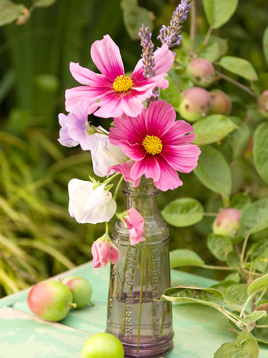 Pink cosmos in antique bottle pictures photos and images for Cooledeko de