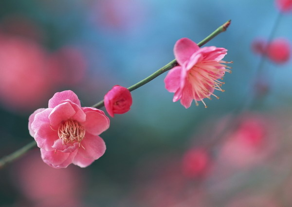 Pretty Pink Sakura Blossom Pictures Photos And Images For Facebook