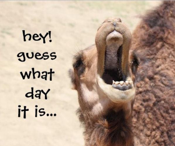 FOTO TË MUAJIT MAJ - Faqe 2 77212-Guess-What-Day-It-Is