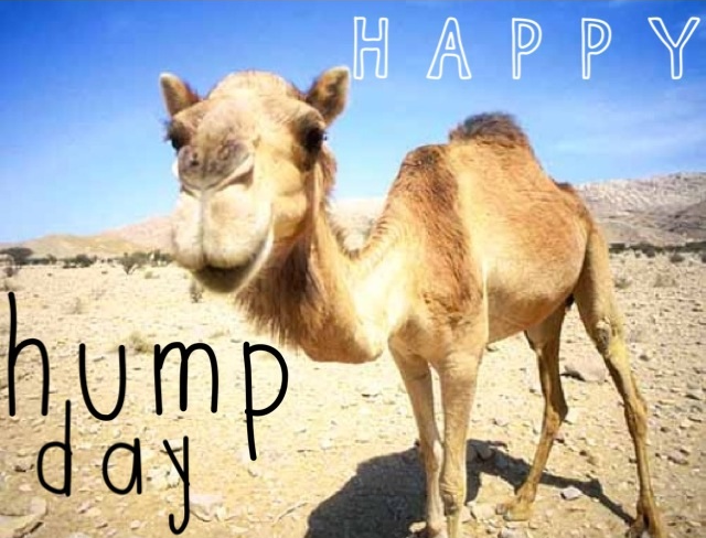 happy hump day pictures  photos  and images for facebook