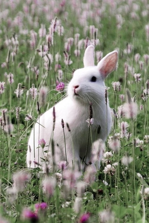 Cute Bunny In A Meadow Pictures Photos And Images For