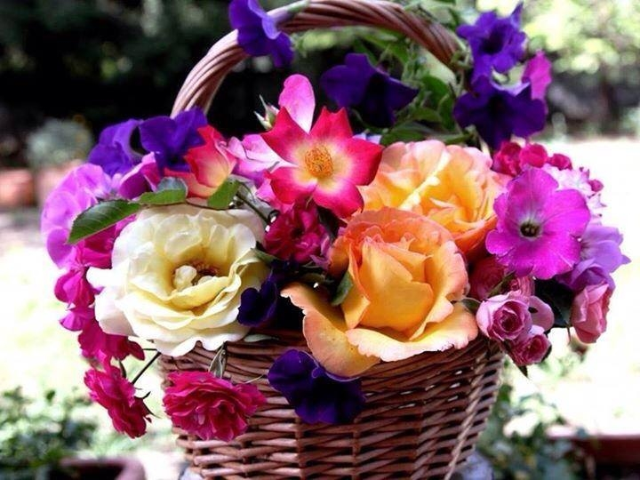 Flower Baskets Photos : Basket of flowers pictures photos and images for