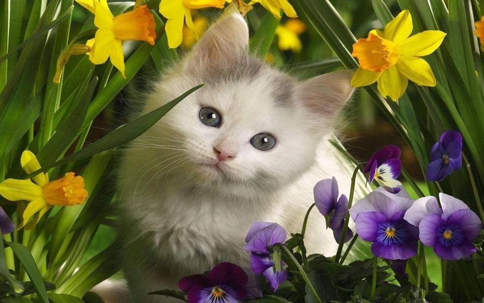Cute Kitty And Spring Flowers Pictures Photos And Images For