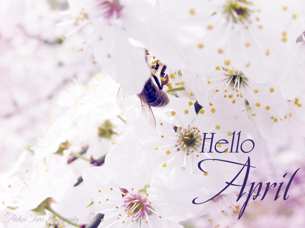Hello AprilHello April Tumblr