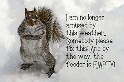 Cold Weather Pictures, Photos, and Images for Facebook ... Funny Winter Quotes For Facebook
