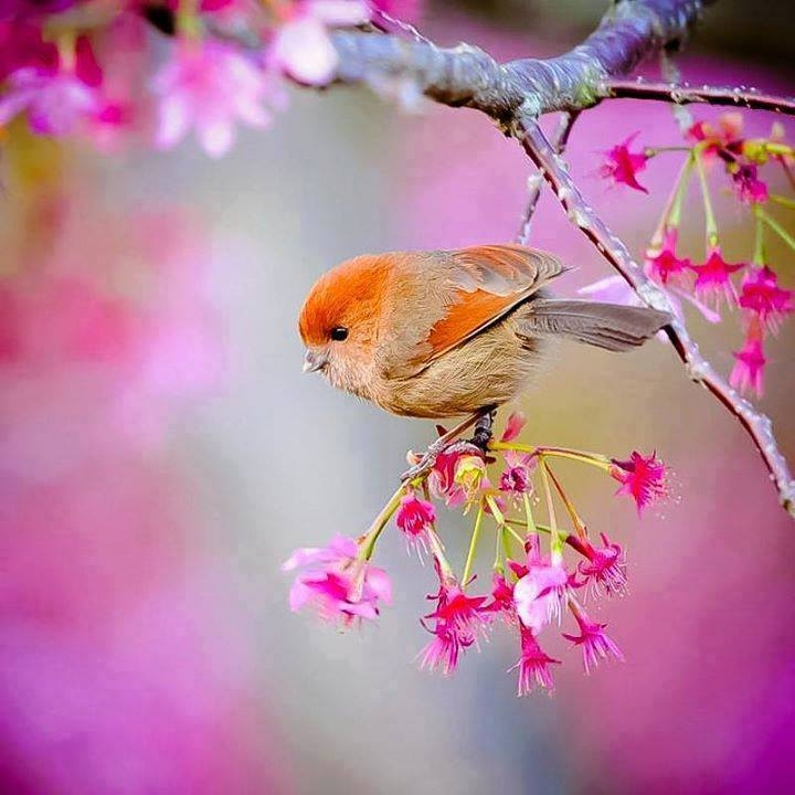 Little Bird in Spring