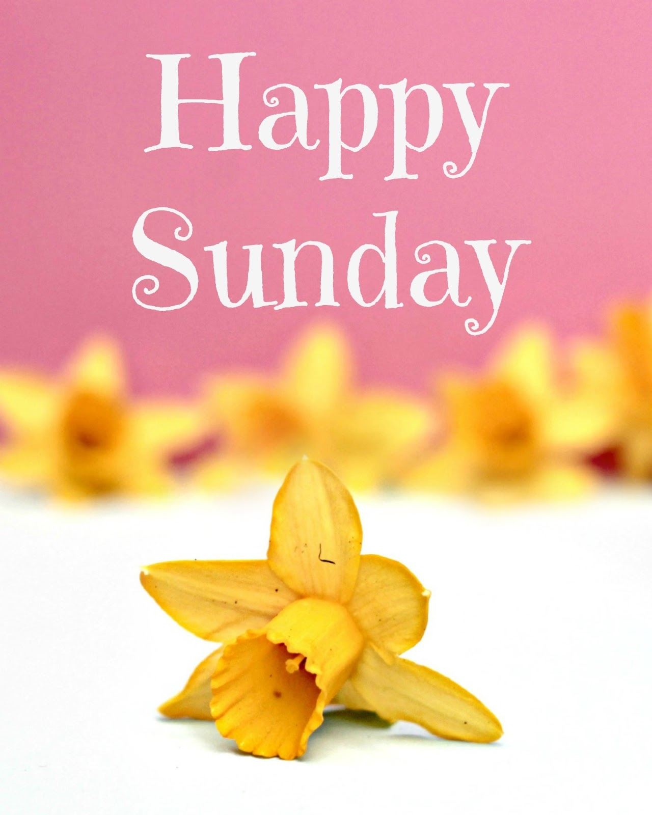 Good Morning Sunday For Her : Happy sunday quotes pictures facebook quotesgram
