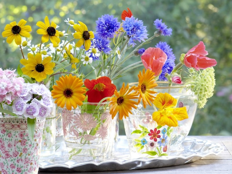 Fresh Cut Flowers Pictures, Photos, And Images For. Recurrent Signs. Claims Signs. Meaningful Signs. Squiggly Line Signs. Ebola Signs Of Stroke. Wall Art Signs Of Stroke. Quotations Signs. Social Phobia Signs