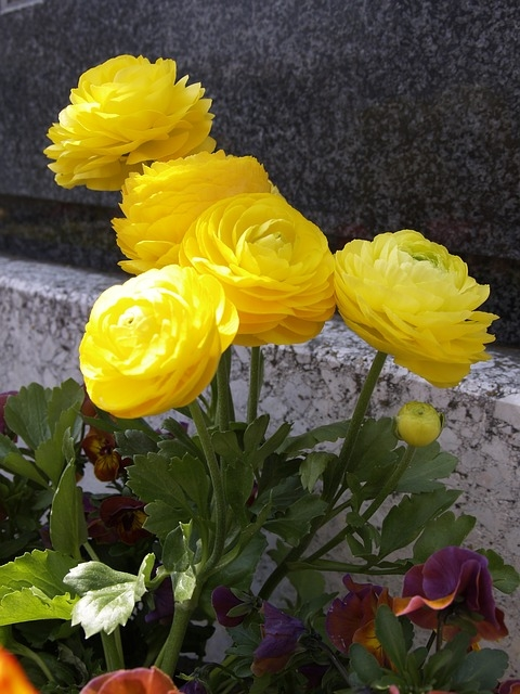 Graveside Flowers Pictures Photos And Images For