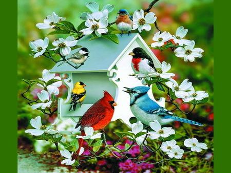 Image result for spring birds