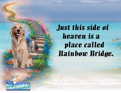 rainbow bridge pictures photos and images for facebook tumblr