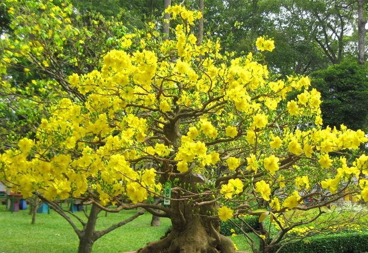 Pretty tree with yellow flowers pictures photos and images for pretty tree with yellow flowers mightylinksfo