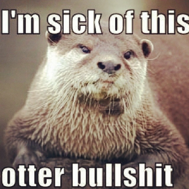 Im Sick Of This Otter Bullshit Pictures Photos And Images For