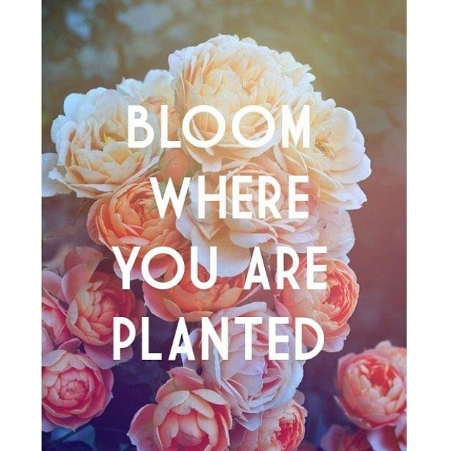 Bloom Where You Are Planted Pictures, Photos, And Images