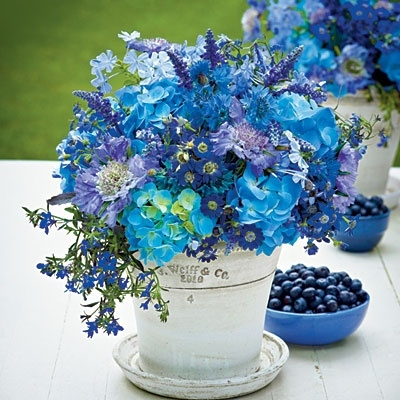 Beautiful Blue Flowers Pictures Photos And Images For Facebook Tumblr Pinterest And Twitter