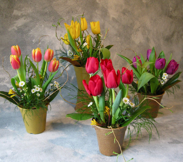 Mini Spring Flower Pots Pictures Photos And Images For
