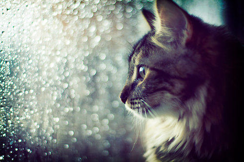 Beautiful Cat Shot Pictures, Photos, and Images for Facebook, Tumblr